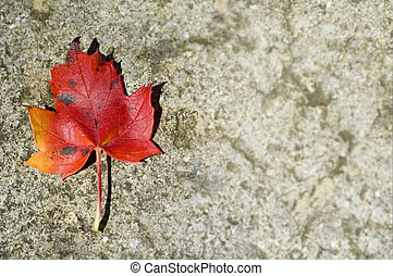 Autumn Leaf with copy space