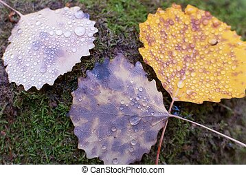 Autumn Leaf with Dew Drops
