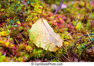 Autumn leaf with water drops in the forest