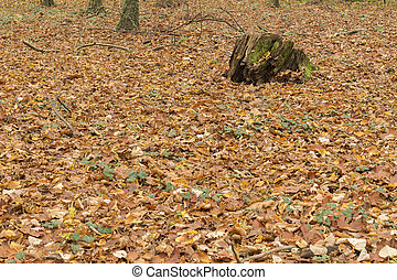Autumn, leafs background