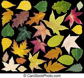 Autumn Leafs Cut Out
