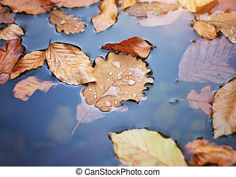 Autumn leafs in water.