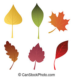 A set of autumn leaves. Isolated on white