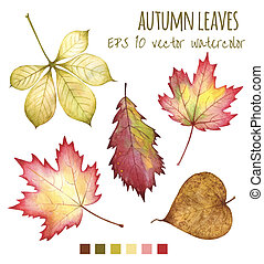 autumn leaves a water color on a white background - autumn...