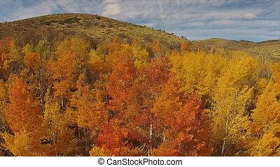 Autumn leaves aerial Colorful Aspen Trees Nevada USA