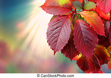 autumn leaves against sunlight