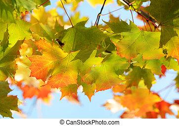 autumn leaves against the clear sky