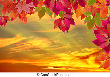 autumn leaves against the sunset