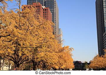 Autumn leaves along Miyuki avenue, Marunouchi, Tokyo, Japan