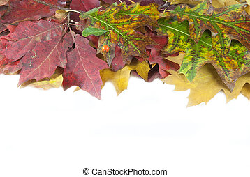 Autumn leaves and acorn with place for your text