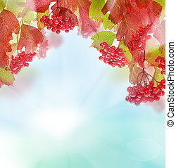 Autumn leaves and berries on sky background