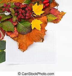 Autumn leaves and berries with paper