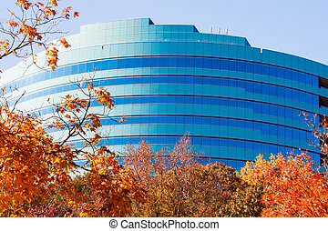 Autumn Leaves and Blue Curved Office