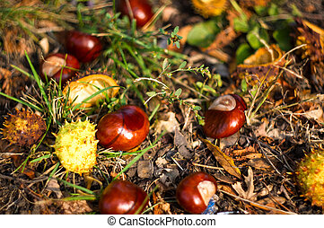 autumn leaves and chestnuts on the ground