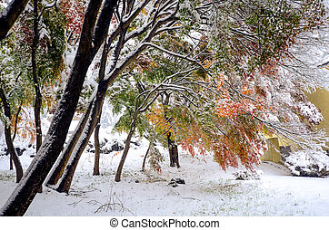 Autumn leaves and first snow in 2016 at Kawaguchi-ko, Japan.