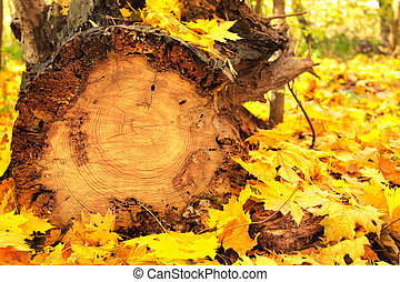 Autumn leaves and log