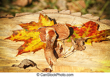 Autumn Leaves and mushroom over wooden background