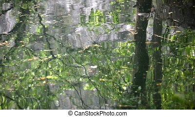Autumn leaves and tree  on water reflections