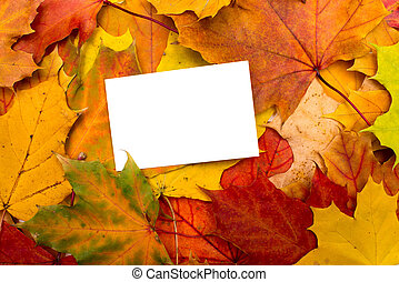 autumn leaves and white sheet background