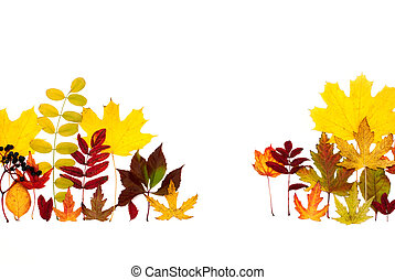 Autumn leaves are different