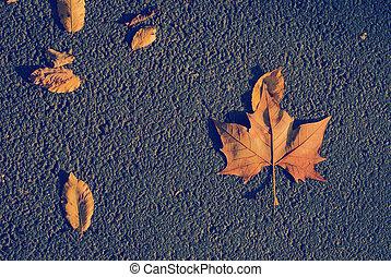 autumn leaves, asfalteren straat