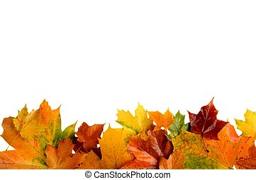 Autumn leaves at bottom isolated on white background