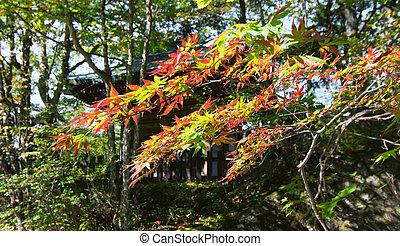 Autumn leaves at Oku Nikko