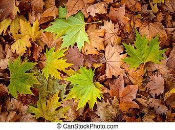 Autumn leaves background - Autumn concept