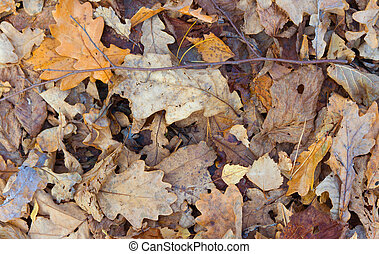 Autumn leaves background. Fallen leaves on the ground.