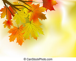 autumn leaves background in a sunny day.