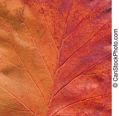 Autumn leaves background. Minimal autumn concept