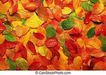 Autumn leaves background - Colorful backround image of...