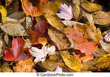 Autumn Leaves Background Texture
