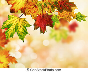 Autumn leaves background with bokeh - Colorful autumn bokeh ...