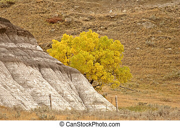 Autumn leaves behind outcropping of rock
