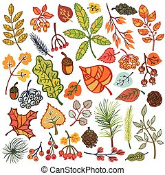 Autumn leaves, berries, pine branches, cones. Fall colors