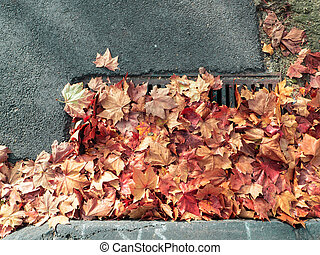 autumn leaves blocking a drain - autumn leaves blocking a...