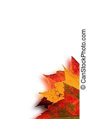 autumn leaves blur