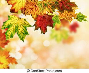 autumn leaves, bokeh, achtergrond