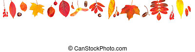 Autumn leaves border isolated on white background. Fall composition with red and yellow fall leaves, berries and nuts