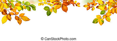 Autumn leaves border on white background - Elegant autumn...