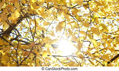 Autumn leaves branch sun