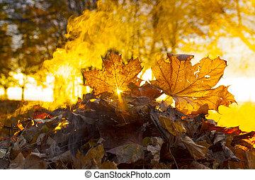 autumn leaves burn