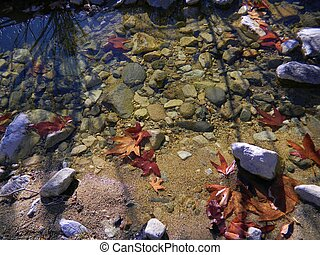 Autumn leaves by creekside - The natural elements of water,...
