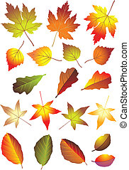autumn leaves - colorful autumn leaves isolated on white...