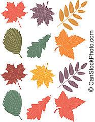 autumn leaves - vector autumn leaves
