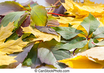 Autumn leaves. close up