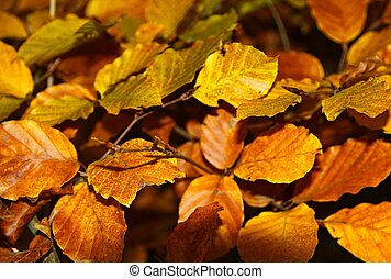autumn leaves close up