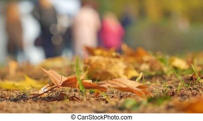 Autumn leaves close-up. In the background, people walk in the autumn park. The crowd of unknown lyudy blurred out of focus for background.
