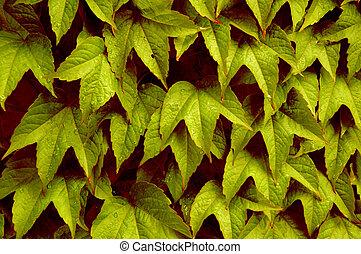 Autumn Leaves - Closeup of leaves